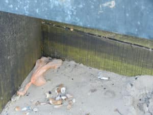 Dog Poo Bags and Cigarette Butts - dangerous to humans and marine life.